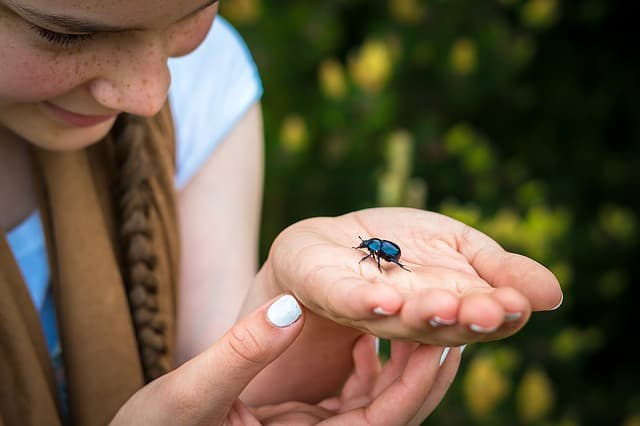 dung beetle on hands of lady